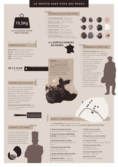 infographie truffe